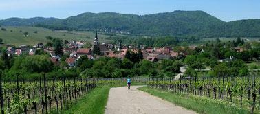 Hügelige Rheinebene in der Südpfalz