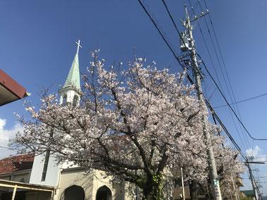 2019年4月初旬、満開になった教会玄関の桜
