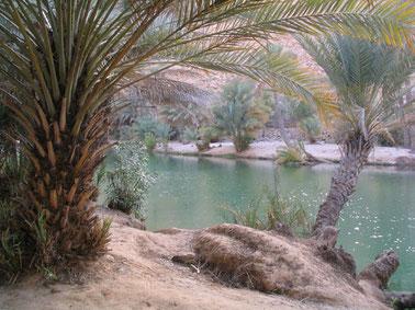 Quelle im Wadi Bani Khalid
