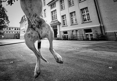 Stadthund by Steffi Atze Hundetrainerin Isabel Boergen