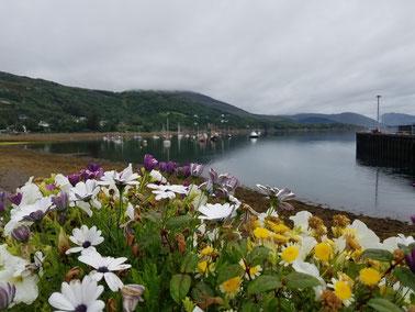 Bunte Blumen im trüben Wetter von Ullapool