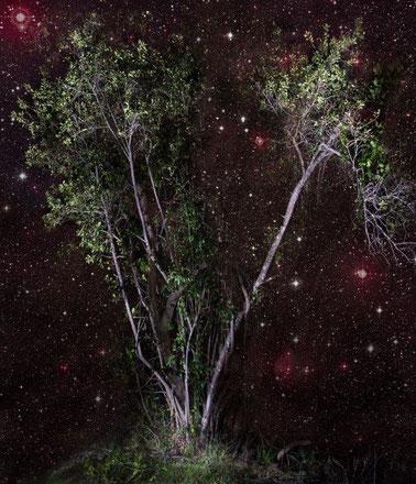 アフリカンツリー 太古の森のミスト 恵みの木 ミルシン・ミステリー