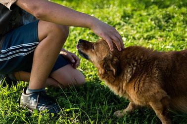 Hunde, die es nicht gerne haben am Kopf angefasst zu werden, zeigen auch hier Beschwichtigungssignale