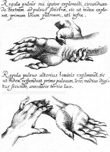 Illustration extraite de l'ouvrage du père Michel Boym : Clavis medica ad chinarum doctrinam de pulsibus, édité par Andreas Cleyer