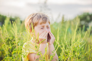 Ragweed Allergie Dr. Sabina Wansch