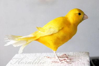 Zucker Kanarienvogel | Floralilie Sugar Art