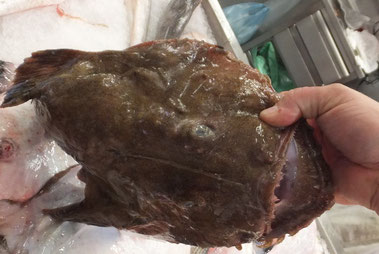 Seeteufel,Tamboril,Monkfish,Fisch,Peixe,Fish,Martins-Kulinarium,Algarve,Portugal
