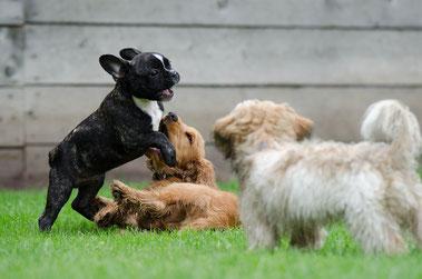 playing puppies Bild von Katrin B. auf Pixabay. Herzlichen Dank!