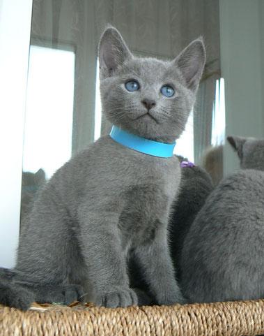 Hermes, котик
