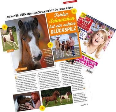 Schnütchen das Pony von der Ballermann Ranch bei Annette u. Andre Engelhardt