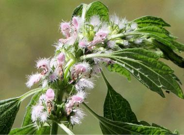Liebliche Blüten in Weiss/Rosa