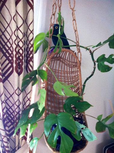 今週の昼間は凄く暖かかったですね~ 観葉植物の調子良さそう、。