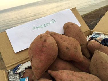 甘い誘惑~❤ 種子島から安納芋届きました♪ 焼き芋定例会しないと!