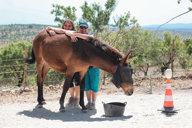 Training a mule using positive reinforcement