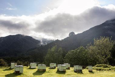 Miels purs de Nouvelle-Zélande sans pollution ni pesticide