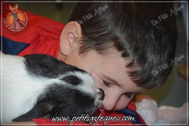 Enfants et chihuahuas