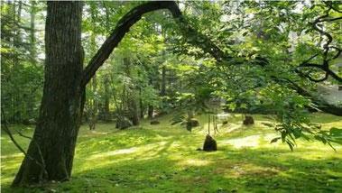 動物たちも訪れる理想的な森