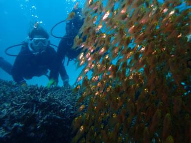 石垣島でのんびりダイビング「ゴールドラッシュ」ヒートハートクラブ