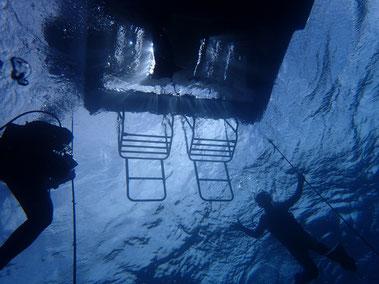 石垣島でのんびりダイビング「2ダイブ限定」ヒートハートクラブ
