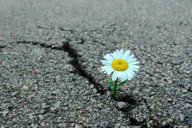 Liebe, Universum,