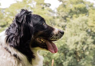 Masterclass Hondenschool De Lijn