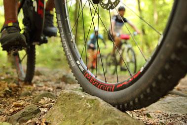 Mountainbike-Reifen auf Waldweg