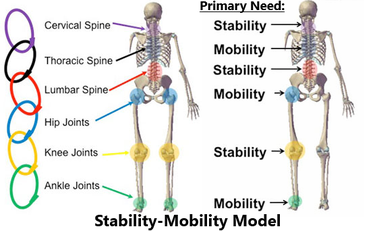 stability-mobility joint needs