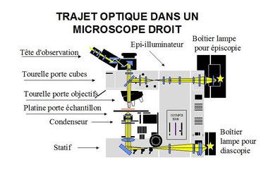 Claude Gonon Microscopie microscope droit