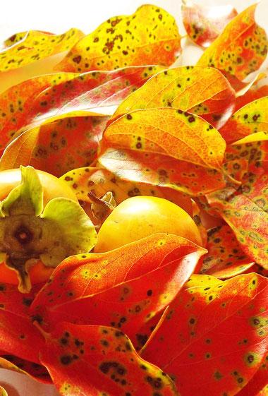 天然きのこ激レアきのこコウ茸カワタケロウジクロカワニンギョウダケサルマイシロマイムラサキシメジ