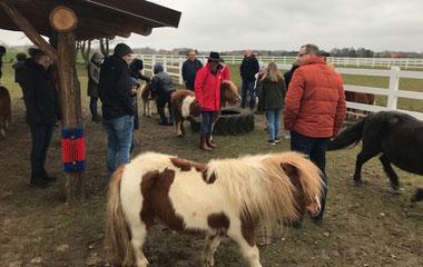 Bei den Shetty-Ponys auf Gut Aiderbichl in Niedersachsen