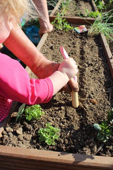 Zum Einsäen eine kleine Rille in die Erde ziehen. (Auf den Samentüten steht meist wie tief das Saatgut eingesät werden muss)
