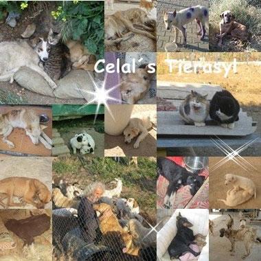 .•*¨Celals Tierasyl *•☆❤ Sie haben 600 Tiere zu versorgen! Bitte helft mit einer Patenschaft oder einer kleinen Spende an:  TESSA e.V. Spk. Marburg / Biedenkopf Kto. Nr. 11009891 Blz.53350000  dankei