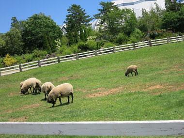 牧場のお友達もたくさんいます。