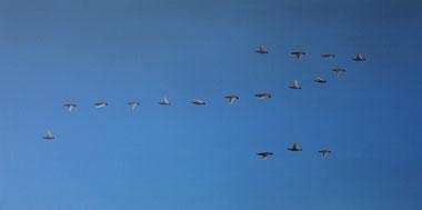 Vogelschwarm 13, 50 x 100 cm, Öl auf Leinwand, 2011