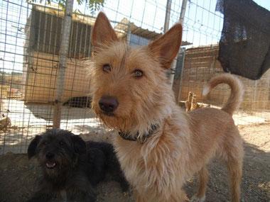 Zori - noch im Tierheim, bei Klick auf das Bild öffnet sich die Geschichte
