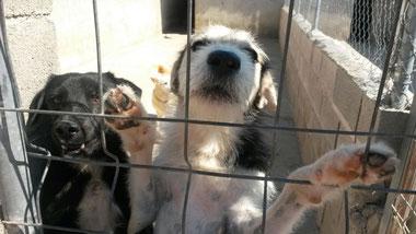 Draufklicken und man kommt zu unseren Hunden in der Vermittlung
