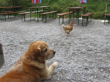 Man sieht förmlich, wie Balou denkt: Du blödes Huhn!