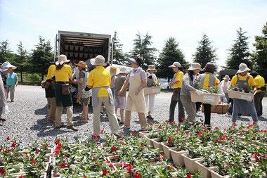 大船渡市永沢仮設住宅で花を配るグリーンアドバイザー