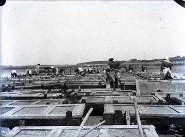 caisses en bois pour stocker les naissains d'huitres plates au siècle dernier en rivière d'Auray