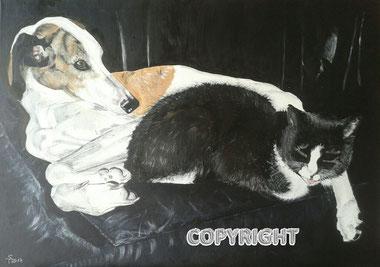 Hundeporträt, Katzenportrait: weiss-brauner Galgo liegt mit schwarzert Katze auf einem schwaruen Ledersofa