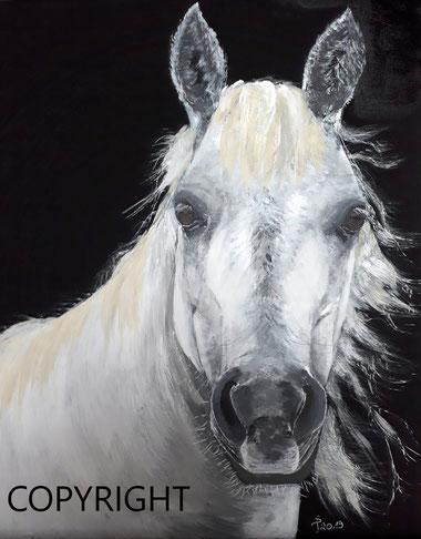 Pferdeporträt (Kopf und Teil des Körpers) eines weissen Pferdes. Dabei schaut des Pferd direkt den Betrachter an