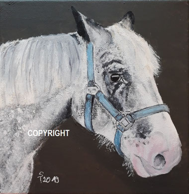 Pferdeporträt:: weisses-grauer Pferdekopf seitlich dargestellt mit blauem Halfter