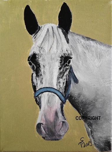 Pferdeporträt: Kopf von weiss-grauem Pferd von vorne mit blauem Halfter