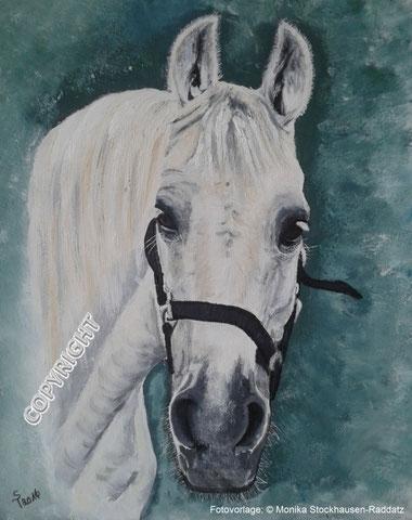 Pferdeporträt: Kopf des weissen Pferdes von vorne dargestellt