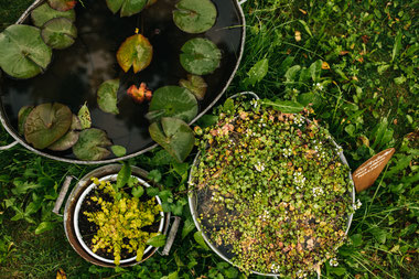 Remstal Gartenschau Mögglingen