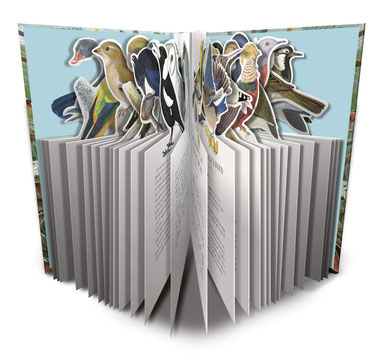 Naturelove - Die 50 schönsten Vögel der Welt von Matt Merritt  - Buchtipp