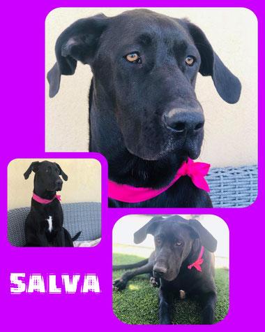SALVA adoptée en Octobre 2018