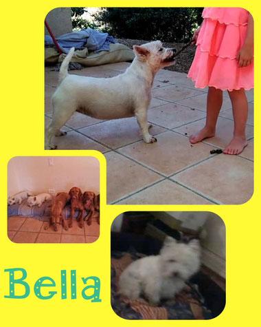 BELLA adoptée en Octobre 2018