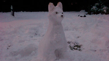 """white fox"" 2012 - Chiara Tomaini"