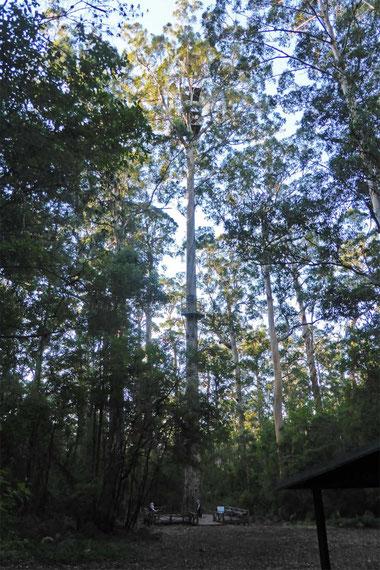The Dave Evans Bicentennial Tree